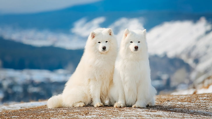 White-Dog-Breeds